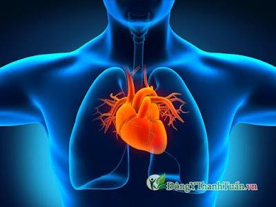 Chè vằng ngăn ngừa bệnh tim mạch và cao huyết áp