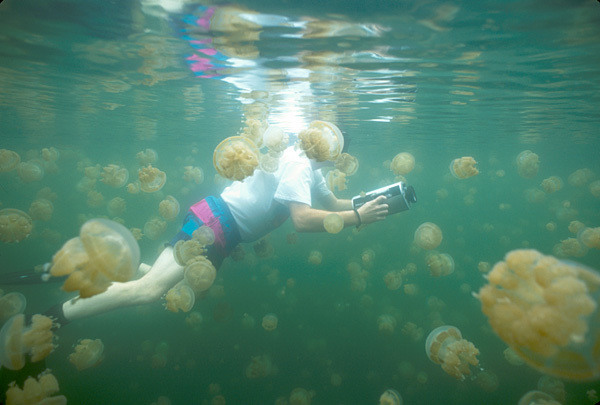 Jellyfish lake snorkeling