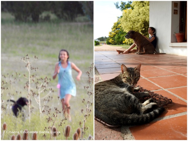 Jugando y descansando en compañía de las mascotas de la Chacra - Chacra Educativa Santa Lucía