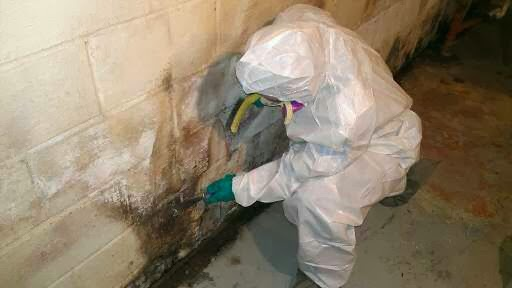 Mold Is Considered To Be Bad When It Growing Inside And On A Sustainable Food Source Common Sources Include Wood Paper Carpet