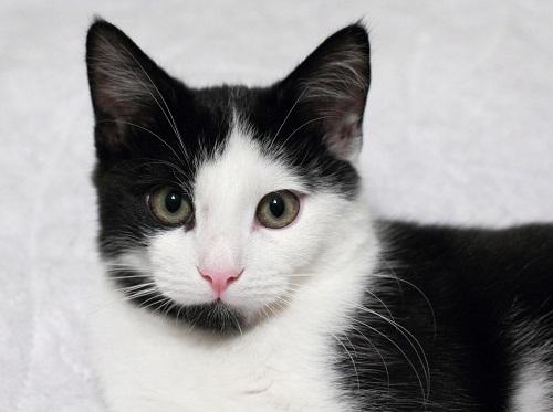 Cute Black & White Cat