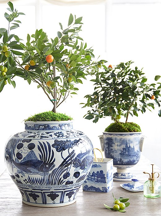 2019 home decor design trend, citrus accents in home decor, orange tree in blue and white ginger jar