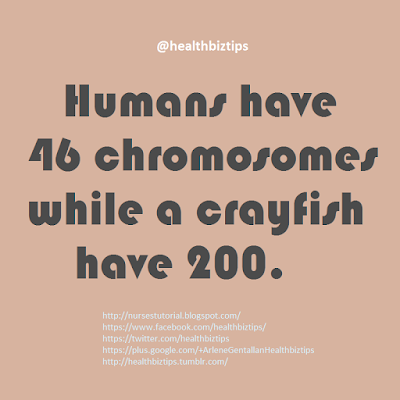 Humans have 46 chromosomes while a crayfish have 200.