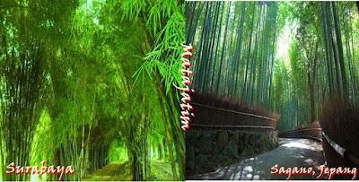Wisata Hutan Bambu, Indonesia