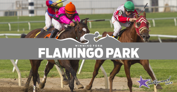 Flamingo Park Racing