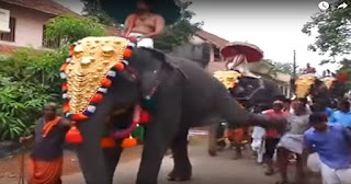 an elephant attacked an old man during a festival in Kerala, when he was walking very near to the elephant