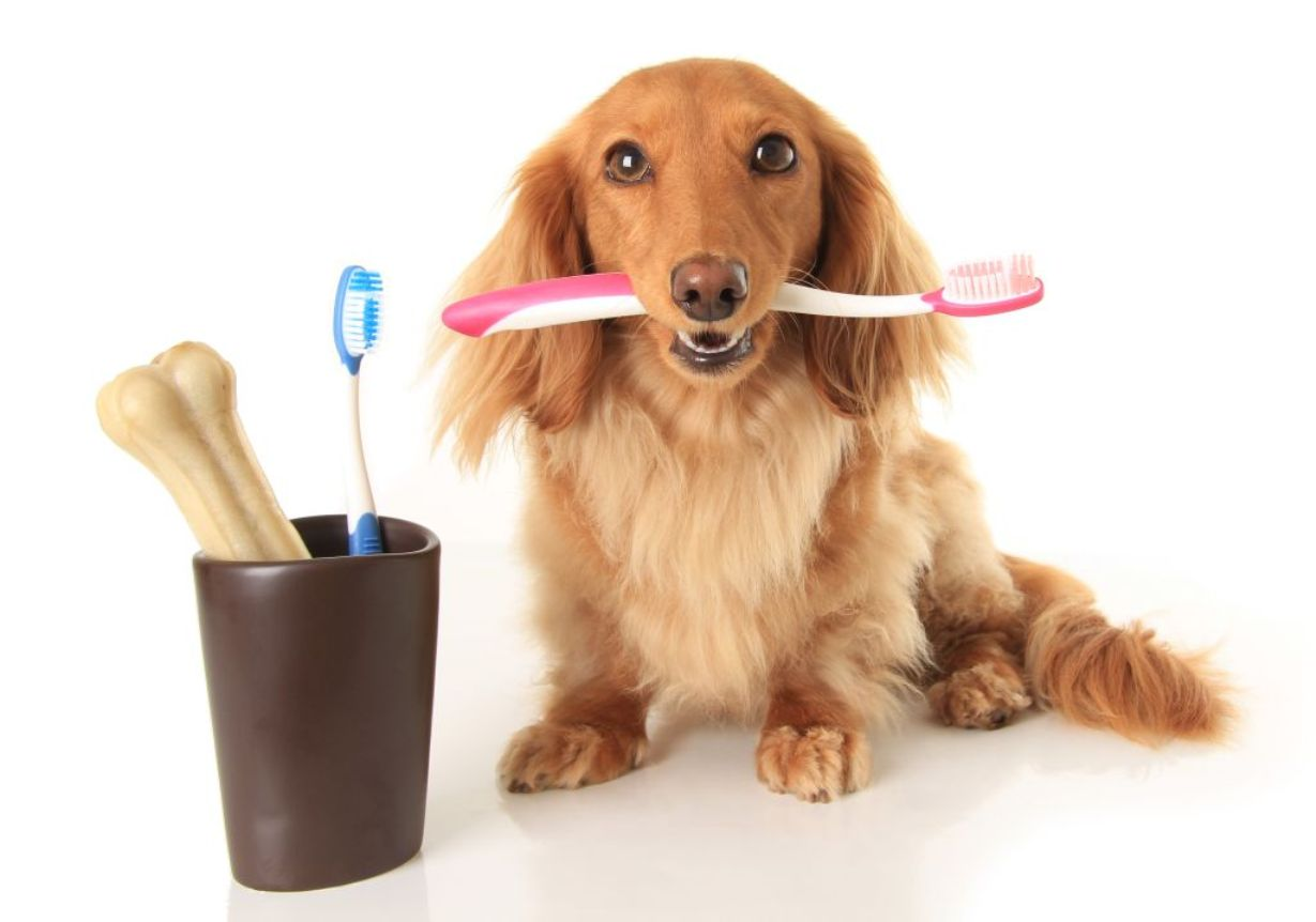 Cuidar da saúde bucal deve fazer parte da rotina dos tutores, que desejam que seus pets sejam sempre saudáveis!