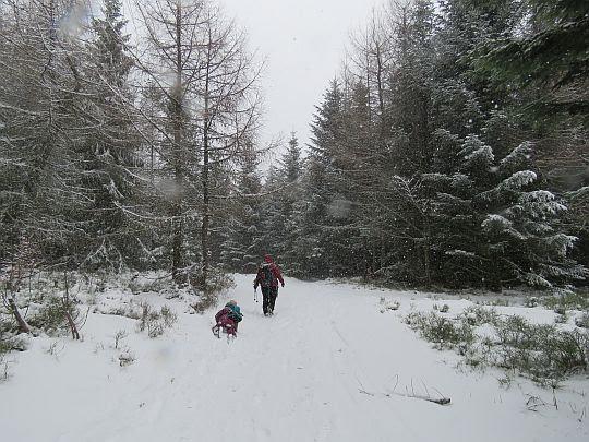 Odejście szlaku do Dobrej z polany Myconiówka.