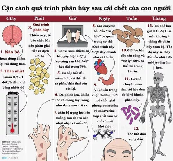 Sau khi chết các bộ phận cơ thể người biến đổi như thế nào