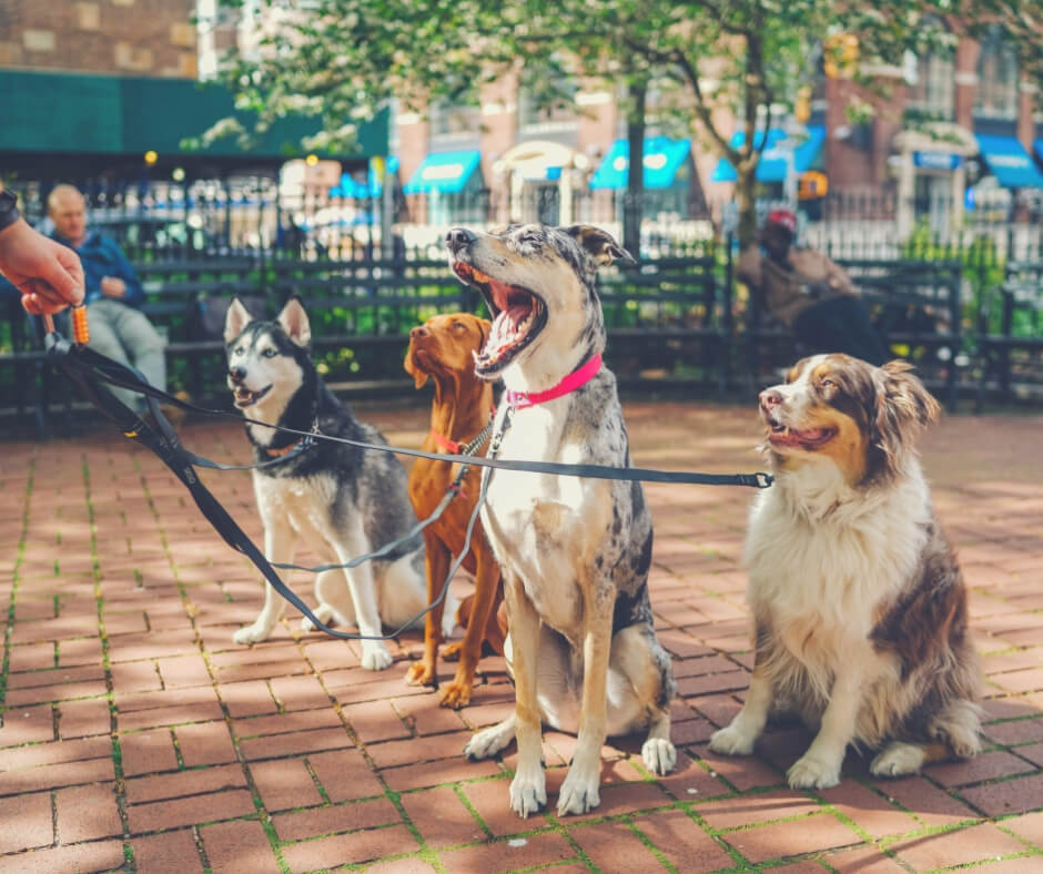 How Having A Pet Can Make The Quality Of Your Life Better | Meet friends for dog walking!