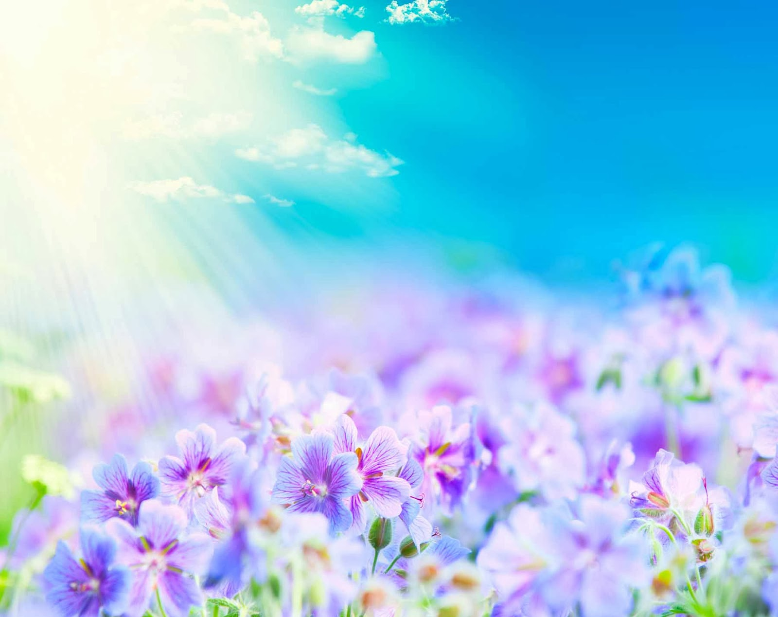 HQ Wallpapers: Fantasy Flower Wallpapers