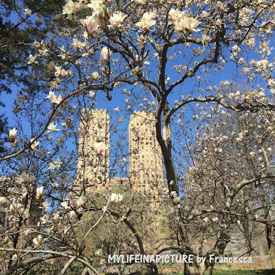 Photo by Francesca, city,New York, spring