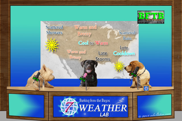 BFTB NETWoof Dog News Weather with weather map
