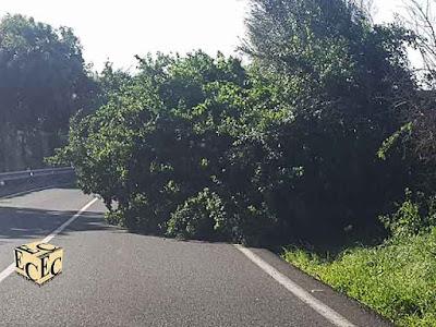 Resumen del temporal de un día en Canarias, 12 febrero