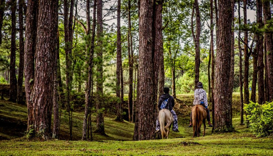Baguio City Horseback Riding in the forest