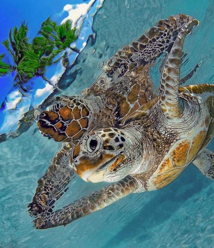 Cool Stuff!!!: Stunning Photographs Of Beautiful Sea