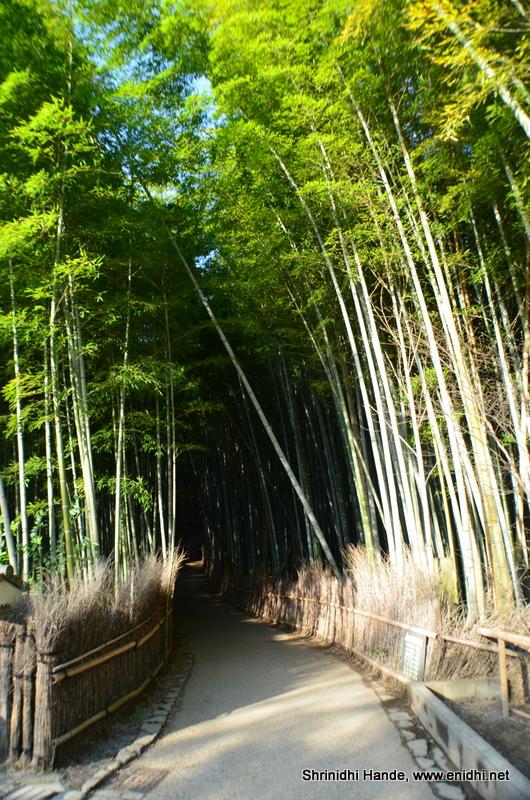 Arashiyama Bamboo Forest Kyoto Japan Enidhi India Travel Blog