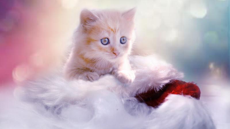 Lovely Kitten for Christmas 2