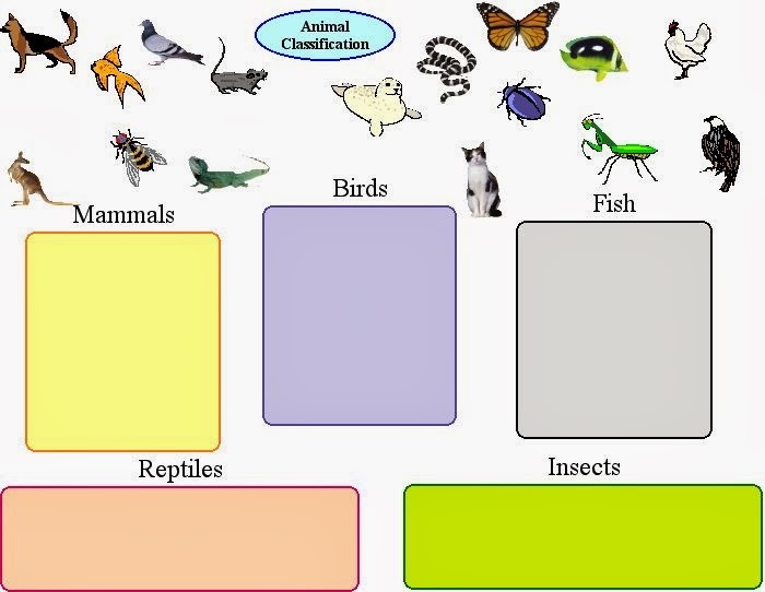 Clil Module Animals 1st Vertebrates And Invertebrates