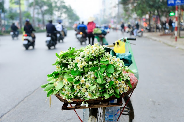 Hanoi scented with grapefruit flowers 6