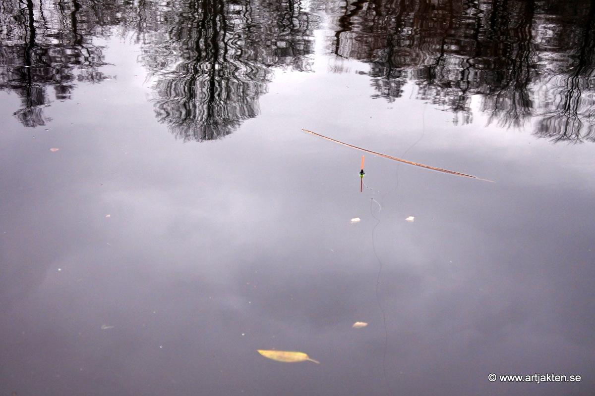 Dejting i Norrbottens ln Tusentals dejtingintresserade