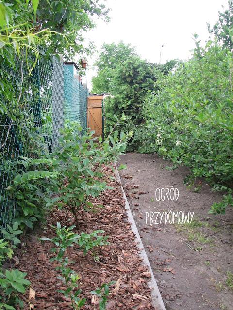 podsumowanie roku, ogród przydomowy