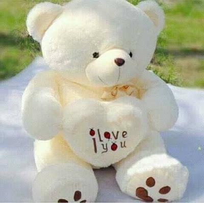 cute teddy dp for whatsapp