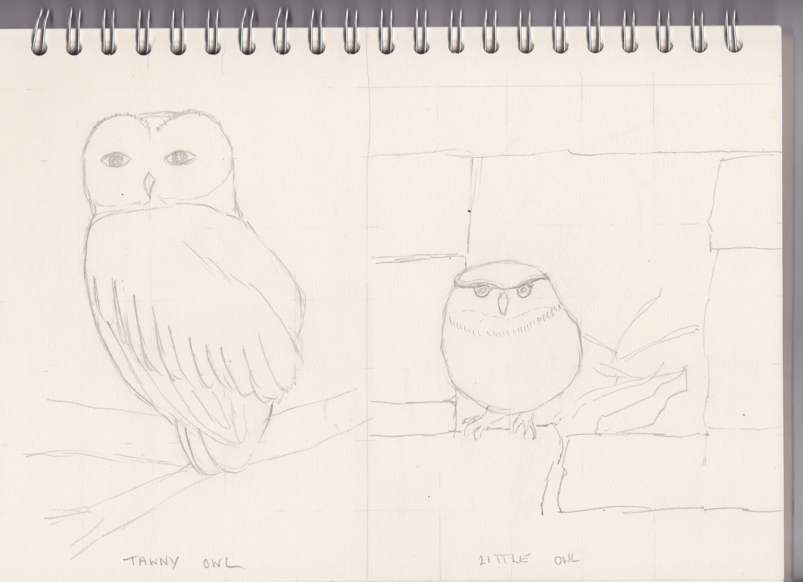 Barn owl drawing