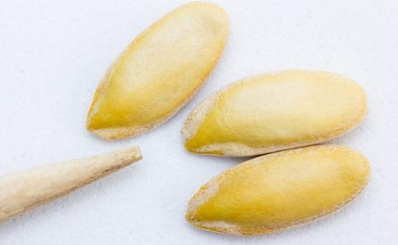 Char Magaz/ Four Seeds for Hair