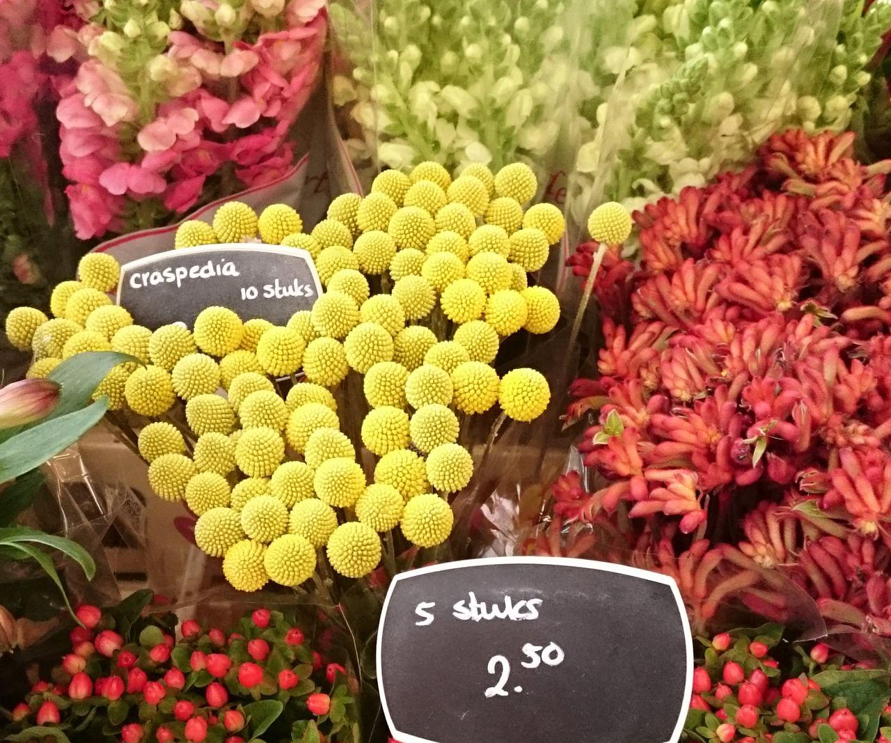 Groningen - city of flowers