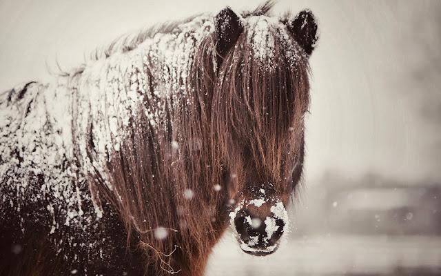 Foto van een paard bedekt met een laag sneeuw