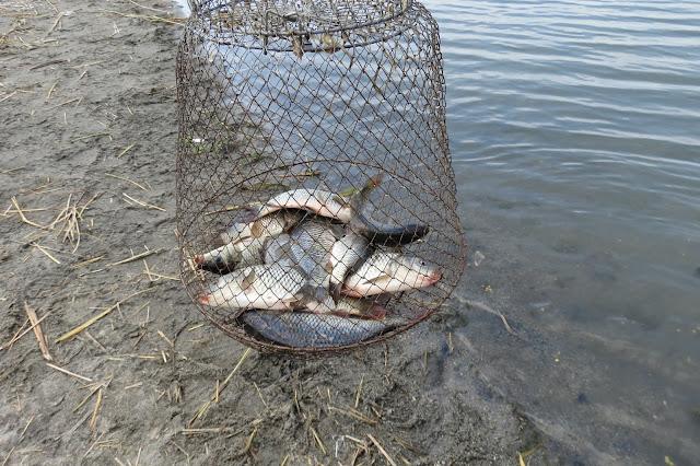 Карп на озере Яу-Балык