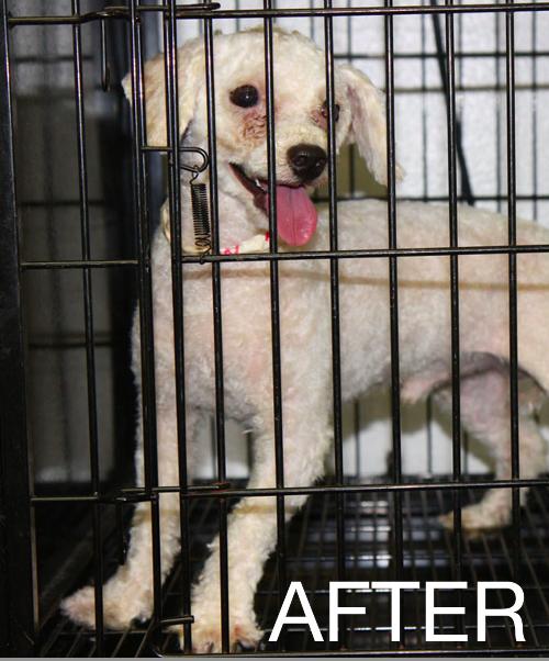 Bark Amp Clark Puppy Mill Rescue In Florida