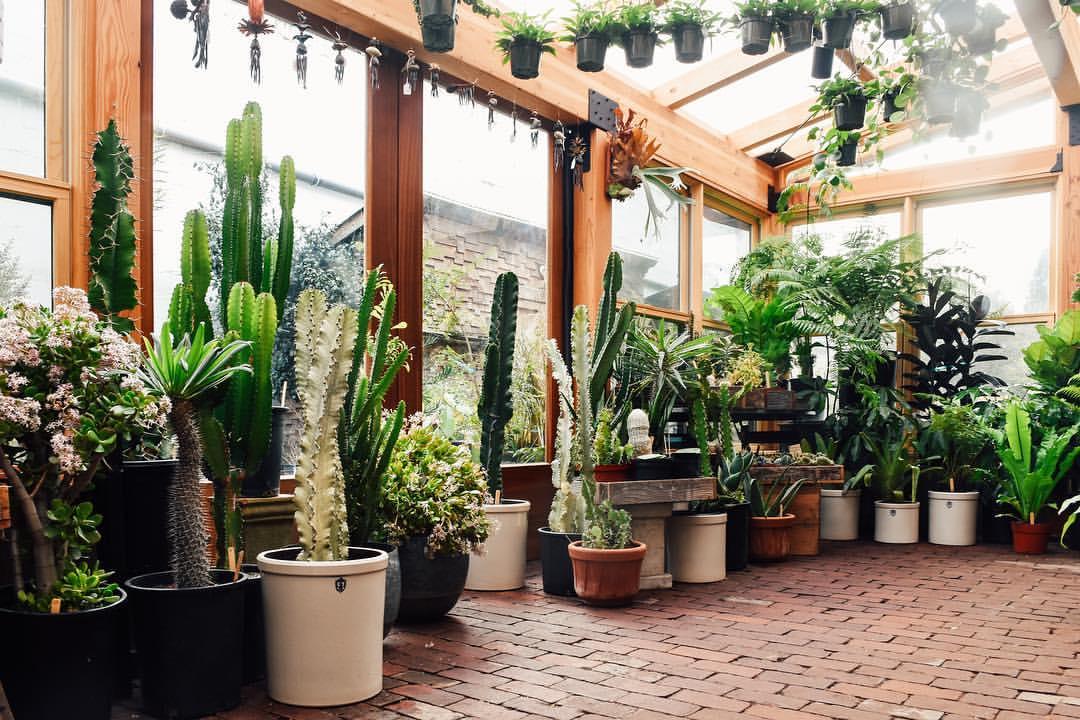 Una de instagram inspiracion y plantas de interior con - Decoracion plantas interior ...