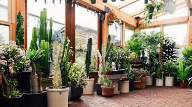 Una de Instagram: Inspiracion y plantas de interior con Pistils Nursery