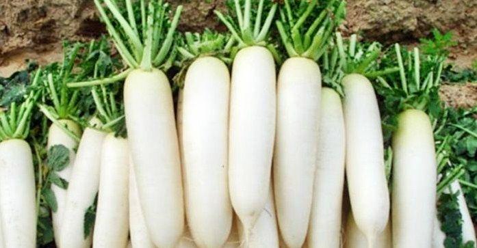 Những tác dụng tuyệt vời của rau củ cải đối với sức khỏe trong mùa đông