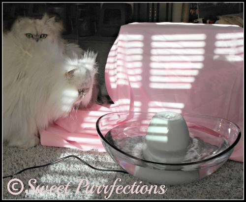 Sneak peek of new pet fountain from PetSafe®