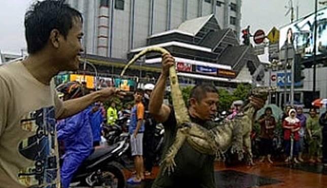 Waspada! Hewan-hewan Liar Ini Bisa Muncul Saat Terjadi Banjir