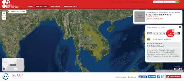 Penyebaran Wilayah Pangasid Catfish