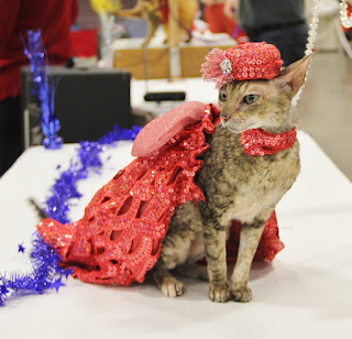 Coco the Couture cat in a sequined gown and matching pill box hat!
