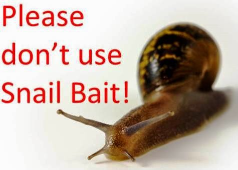 Dangers of Snail Bait