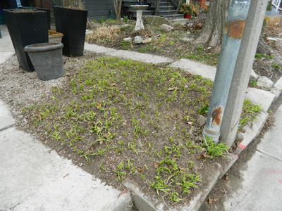 Parkdale Toronto front garden spring clean up after by Paul Jung Gardening Services