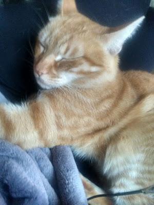 hoteles-admiten-gatos-viajar-con-mascotas