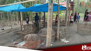 Polisi Gerebek Arena Judi Sabung Ayam Di Desa Karangrejo, Gabus