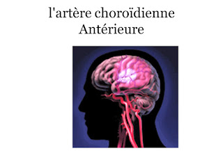 l'artère choroïdienne Antérieure .pdf