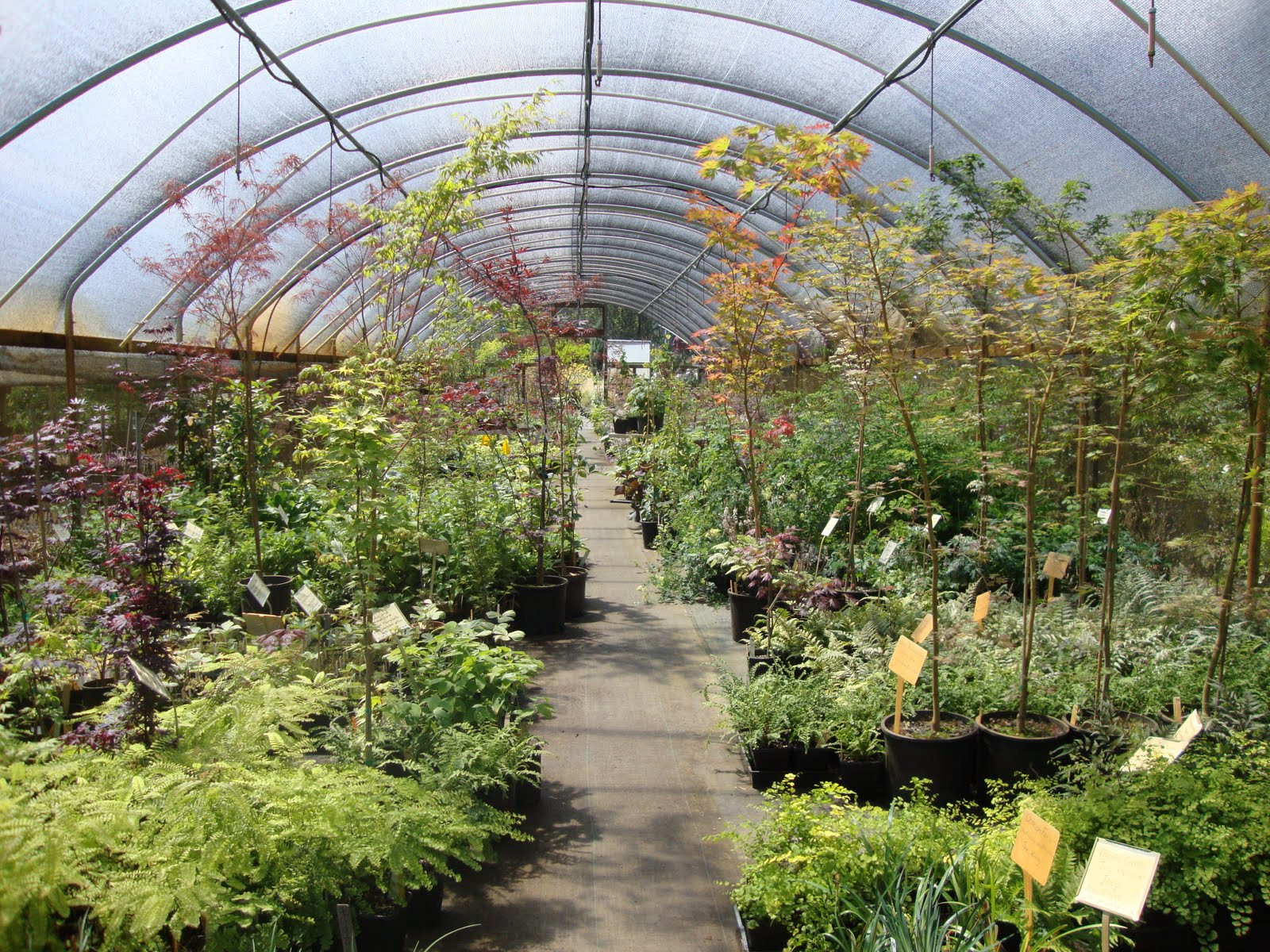 After Visiting Bauman S Farm Fry Road And Mosaic Gardens My Last Stop Of The Day Was To Be Dancing Oaks Nursery In Monmouth Oregon