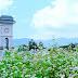 Unique Buckwheat Flower Festival in Sun World Fansipan Legend, Lao Cai 2017