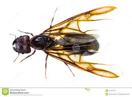 matar-hormigas