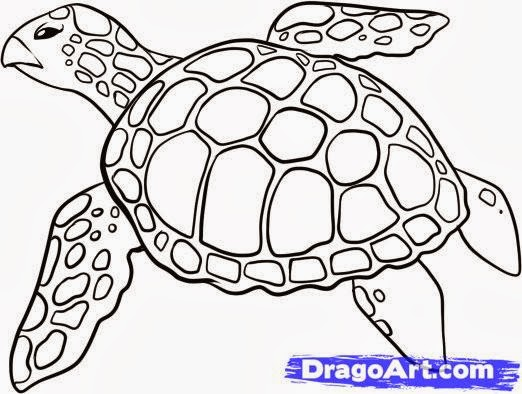 Literature for young learners: KENSUKE'S PROJECT: SEA TURTLES