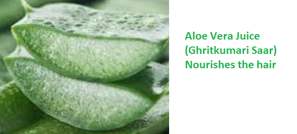 Aloe Vera Juice (Ghritkumari Saar) Nourishes the hair